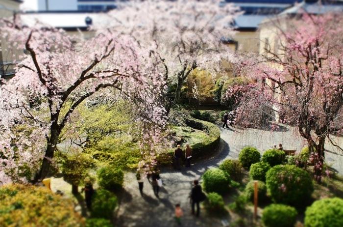 京都府庁3 (700x462).jpg