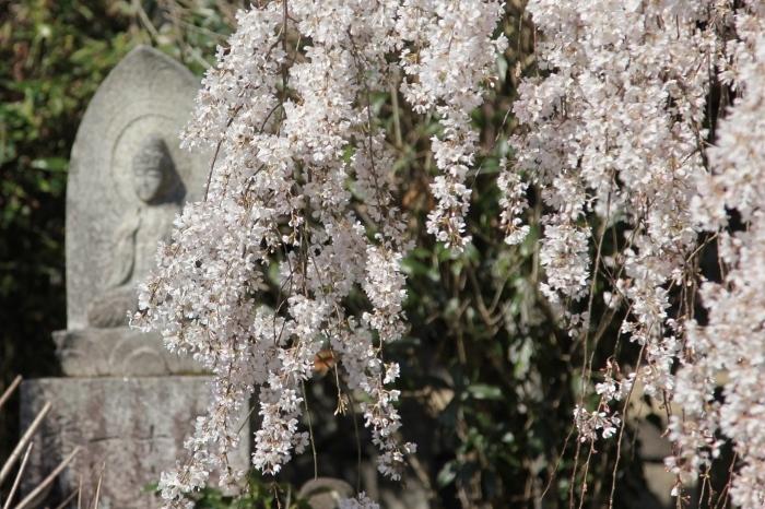 大野寺5 (700x466).jpg