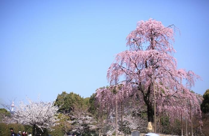 東寺7 (700x457).jpg