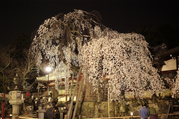 氷室神社5 (700x466).jpg