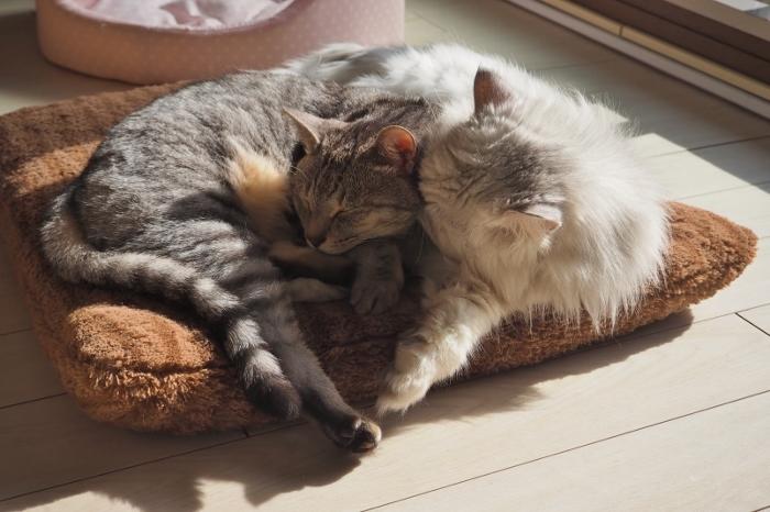 猫団子 (700x466).jpg