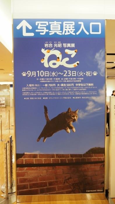 猫展1 (394x700).jpg