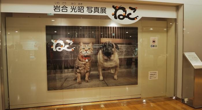 猫展 (700x384).jpg