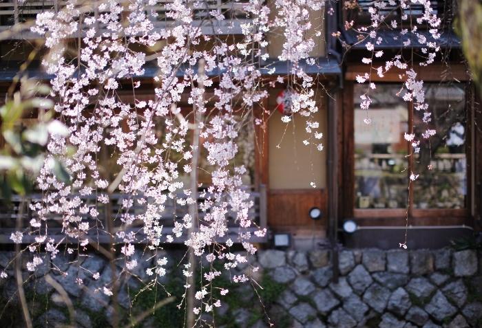 祇園白川1 (700x477).jpg