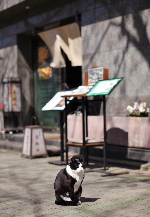 祇園白川3 (484x700).jpg