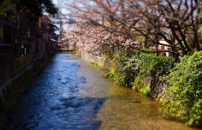 祇園白川4 (700x450).jpg