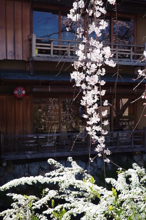 祇園白川5 (467x700).jpg