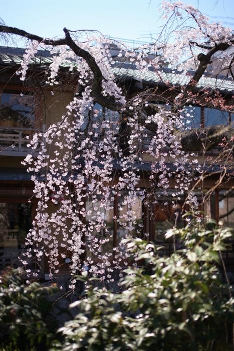 祇園白川6 (467x700).jpg