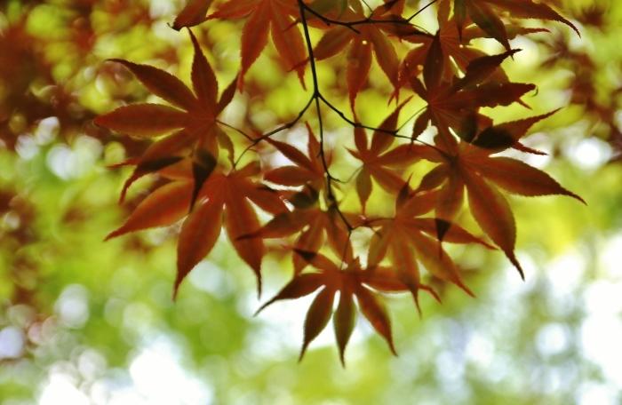 神峯山寺7 (700x456).jpg