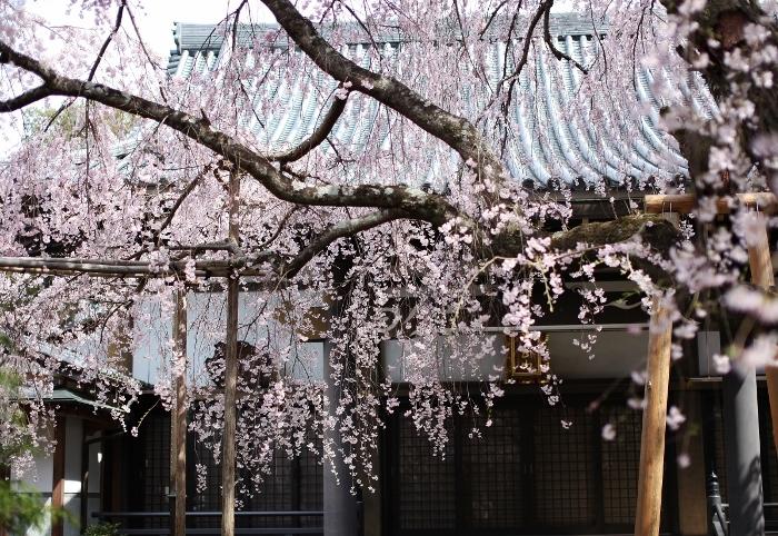 西迎寺2 (700x482).jpg