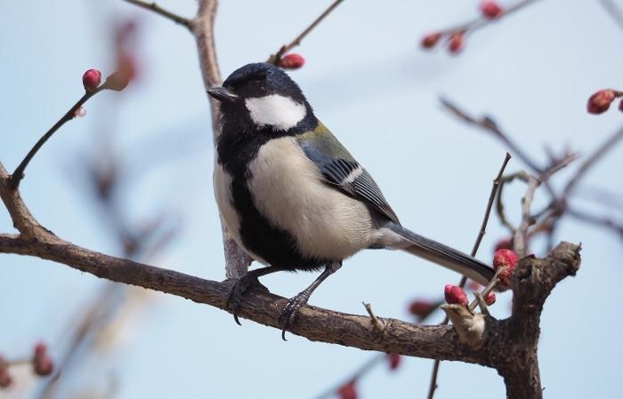鳥1 (700x449).jpg